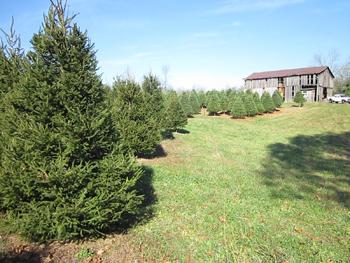Keeping A Christmas Tree Fresh